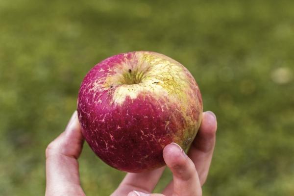 Dajte si jablká zo školskej záhrady